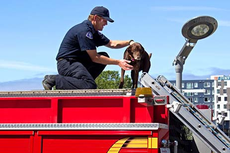 Fireman and dog on a firetruck roof